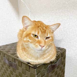 人間が大好きな仲良し猫です(2匹一緒に家族になってください) - 猫