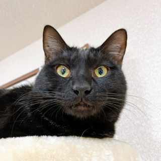 人間が大好きな仲良し猫です(2匹一緒に家族になってください) - 座間市
