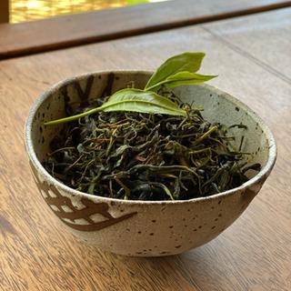 新茶手作り体験!お茶を摘んで自分で手作りしてみませんか? 常総市