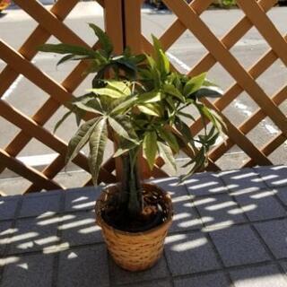 造花.観葉植物3点セット − 宮城県