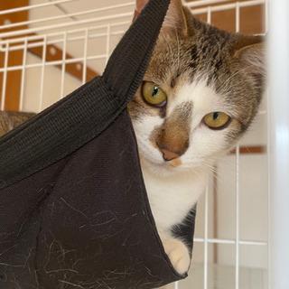 アパートに置き去りにされた猫ちゃん達の里親募集 ずっとのお家を探...