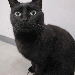 可愛い黒猫さんです!