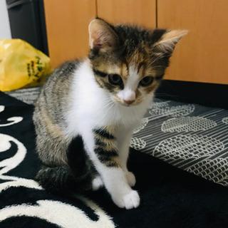 可愛いハチワレ猫ちゃん ジェシー