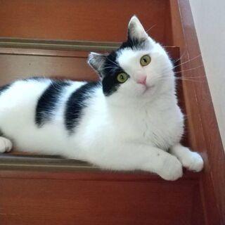 子猫ちゃん&成猫ちゃん 【4/25(日曜日) 🌟譲渡会🌟】  − 福岡県