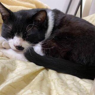 推定2~3歳位 のんびり屋さんで誰にでも人懐っこい黒白くん【5/16(日曜日) 🌟譲渡会🌟】  - 猫