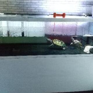 アクリル水槽 大型水槽 1800x900xh600 t13…
