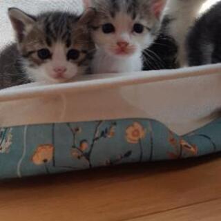 生後約1ヶ月の子猫の里親さん募集します