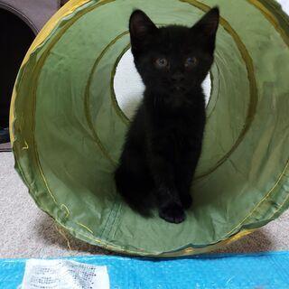 【里親さん決定しました】2月23日生まれ 黒猫ちゃん♀の画像