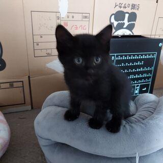 【里親さん決定しました】2月23日生まれ 黒猫ちゃん♀ - 愛知郡
