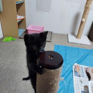 【里親さん決定しました】2月23日生まれ 黒猫ちゃん♀ - 猫