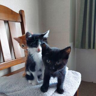 【里親さん決定しました】2月23日生まれ 黒猫ちゃん♀ − 愛知県