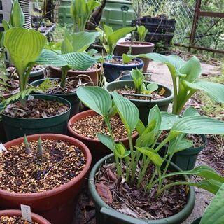 お庭の草取りや植物の植え替えなど。