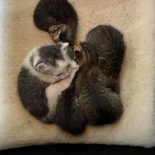 生後まもない子猫です、どなたか飼ってくださる方いらっしゃいませんか。