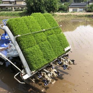 農家短期アルバイト従業員募集