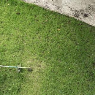 草刈り機で草刈り
