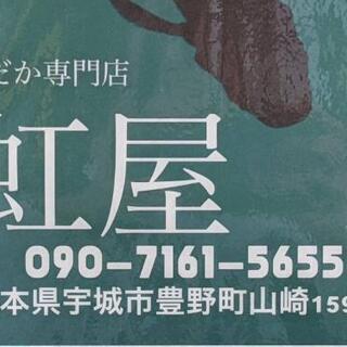 メダカすくい大会in虹屋