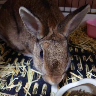 可愛いミニウサギです。