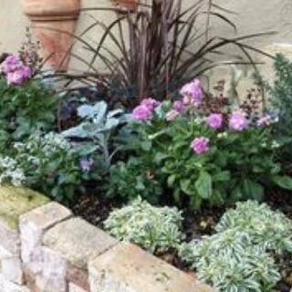 介護施設で働いています。花壇を作りたいので助けてください!