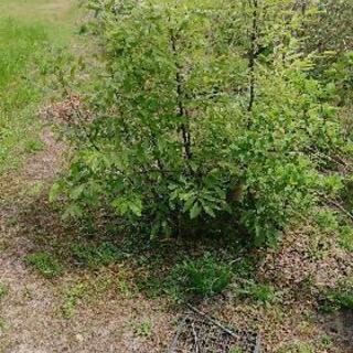 垣根の補植やまとめて寄せ植は如何か