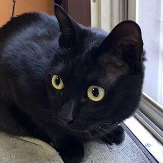 5才メスの黒ネコの里親さまを募集しています