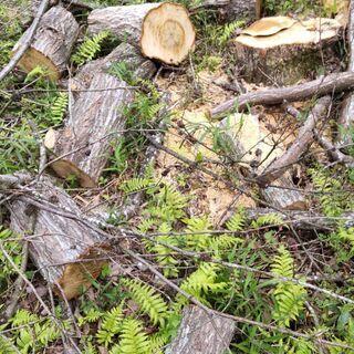薪 伐採木 竹 差し上げます 持っていける方