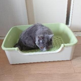 猫用トイレ