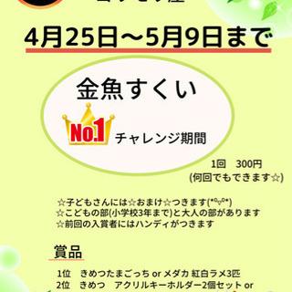 【金魚すくいNo.1チャレンジ✨】岐阜県関市