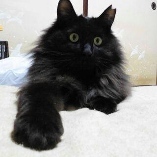 トトロみたい★猫との幸せ全て叶える猫 ライちゃんの画像