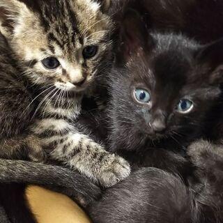 生後1ヶ月半の子猫です