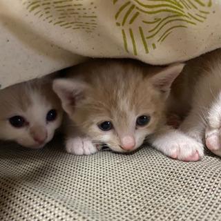 里親決まりました🙇♂️3月産まれの3匹です