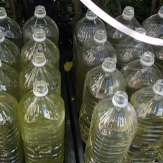ミジンコ 種水 2L 三本 数量限定 500円