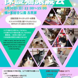 第16回保護猫譲渡会in山口県