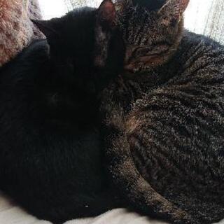 メス猫6ヶ月過ぎ