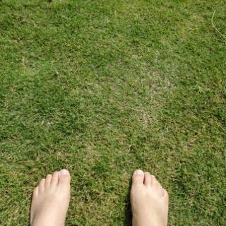 お庭にゴルフ場でも使用する芝、張ってみませんか?
