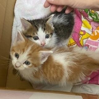子猫2匹保護しました(保留中)
