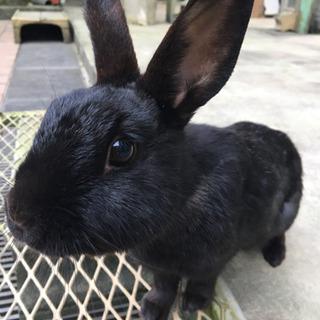 ウサギちゃんの新しい家族を探しています🐰