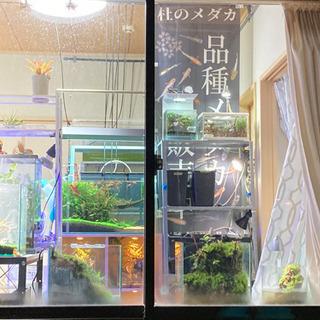 【ネット決済】メダカ・レイアウト水槽販売 お気軽にご連絡ください