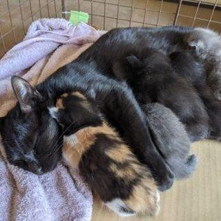 【募集一旦停止します】母猫・仔猫 0か月里親募集