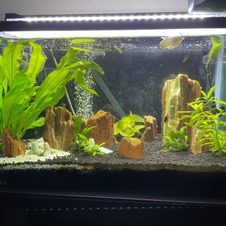 ◼️5月期限◼️60cm水槽セット アクアリウム 熱帯魚