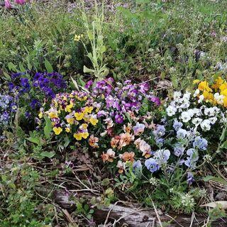 お花溢れる食べれる庭つくり