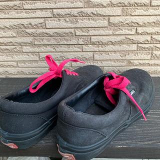 VANS/レディース靴