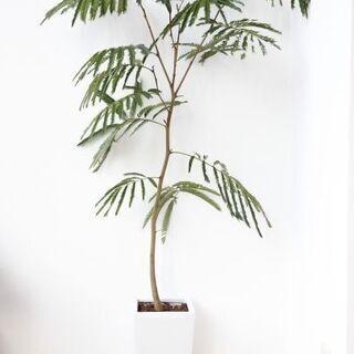 室内の観葉植物を光触媒加工いたします。