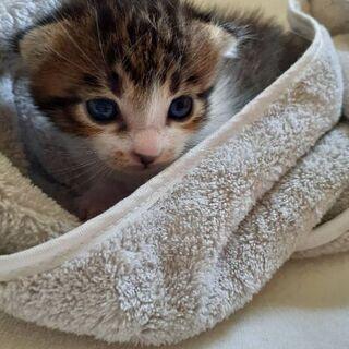 野良猫ちゃんの赤ちゃん