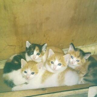 人馴れした個性的な日本猫