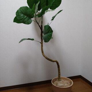 ニトリ ウンベラータ120cm 植木鉢