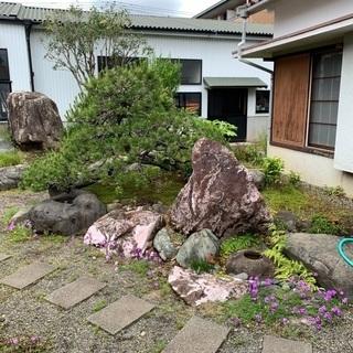 【ネット決済】さしあげます:大物庭石多数といい枝ぶりの低い松