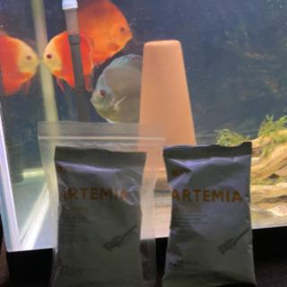 【ネット決済・配送可】熱帯魚、ディスカス、淡水魚