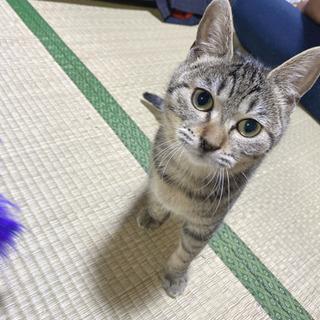 キジ猫ちゃん☆.
