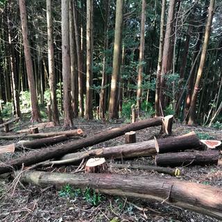 山口県、東部中部お庭、山伐採、草刈り承ります!