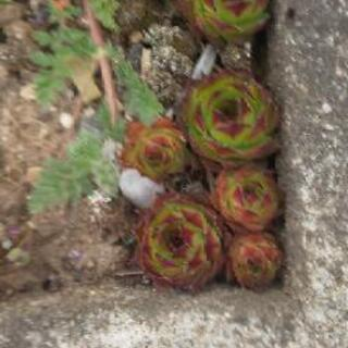 植物  5コ